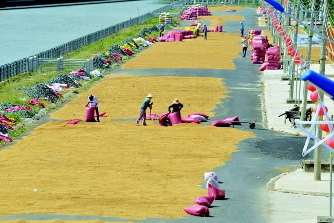 Rộng cửa xuất khẩu gạo chất lượng cao - Ảnh 1.