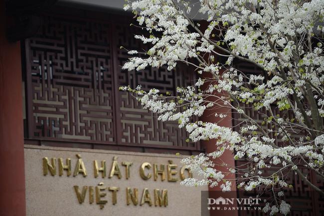 Ngắm hoa sưa 'phủ tuyết' phố phường Hà Nội - Ảnh 8.