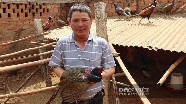 6 năm nuôi chim trĩ, lão nông này bán giá 200 ngàn/kg thu nhập vài trăm triệu/năm - Ảnh 2.