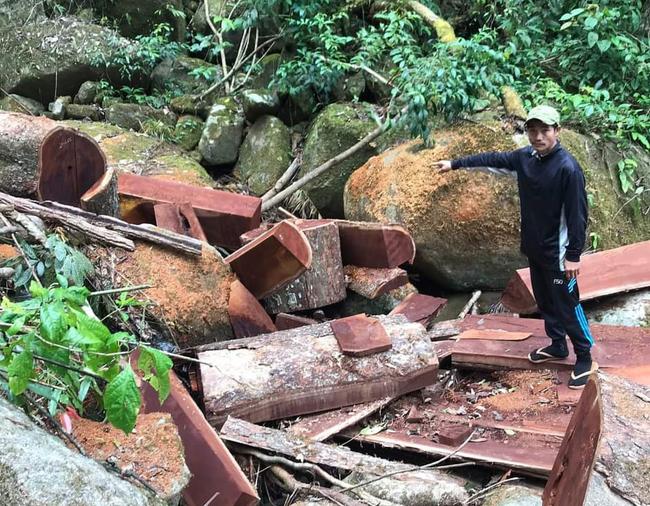 Lâm Đồng: Liên tiếp phát hiện những vụ phá rừng lớn giáp tết Tân Sửu 2021 - Ảnh 1.