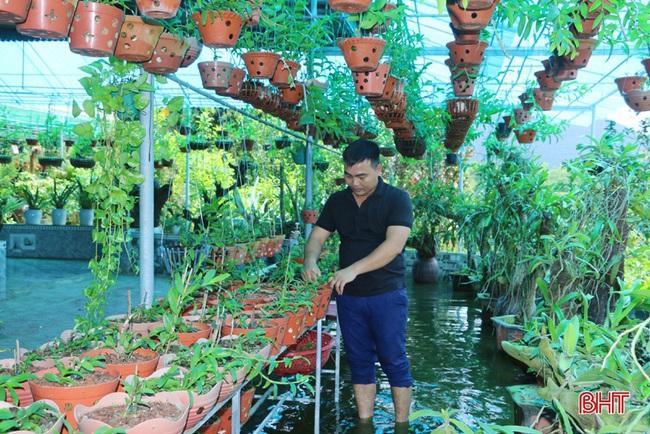 """50 giò lan rừng đột biến đẹp mê li trong vườn lan rừng """"khủng"""" của một nông dân tỉnh Hà Tĩnh - Ảnh 2."""