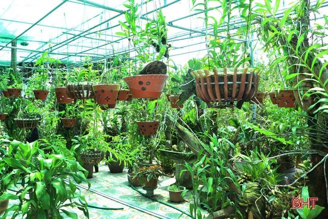 """50 giò lan rừng đột biến đẹp mê li trong vườn lan rừng """"khủng"""" của một nông dân tỉnh Hà Tĩnh - Ảnh 11."""