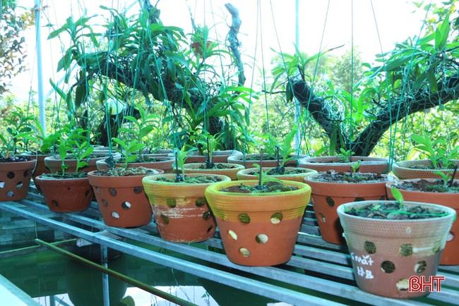 """50 giò lan rừng đột biến đẹp mê li trong vườn lan rừng """"khủng"""" của một nông dân tỉnh Hà Tĩnh - Ảnh 6."""
