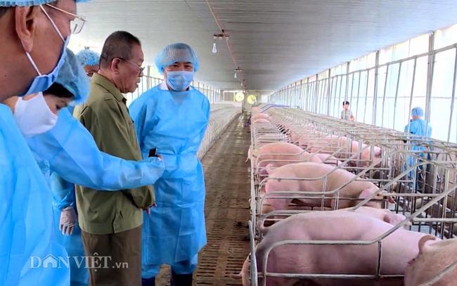 Bộ NNPTNT kiểm tra công tác tái đàn và nguồn cung thịt heo ở thị trường phía Nam