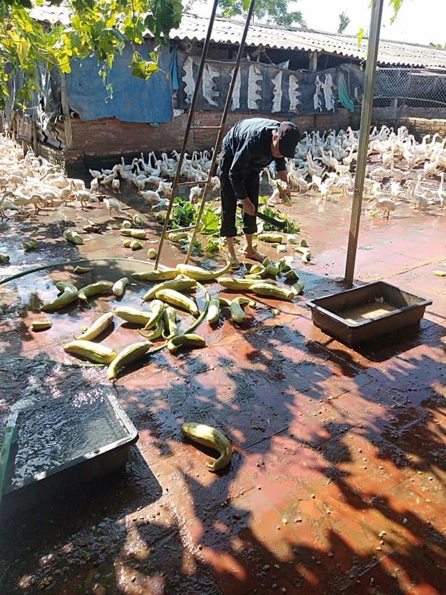 """Giá gia cầm hôm nay 5/2: Giá vịt thịt miền Nam bất ngờ """"ấm"""" trở lại, người nuôi gà thịt chưa bớt lo - Ảnh 3."""