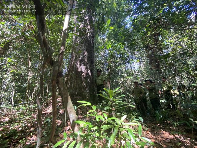 Theo chân bảo vệ vào rừng sâu canh gỗ quý ngày Tết - Ảnh 7.