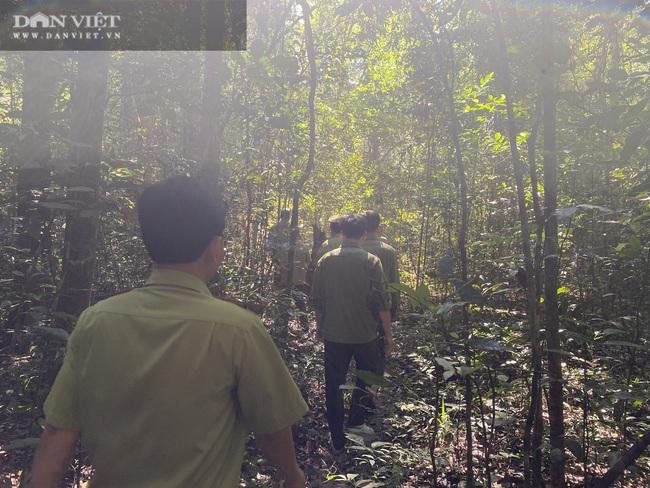 Theo chân bảo vệ vào rừng sâu canh gỗ quý ngày Tết - Ảnh 10.