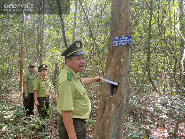 Theo chân bảo vệ vào rừng sâu canh gỗ quý ngày Tết - Ảnh 4.