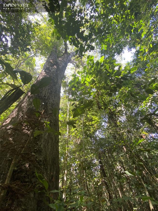 Theo chân bảo vệ vào rừng sâu canh gỗ quý ngày Tết - Ảnh 6.