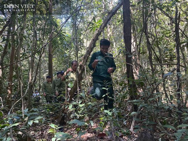 Theo chân bảo vệ vào rừng sâu canh gỗ quý ngày Tết - Ảnh 5.