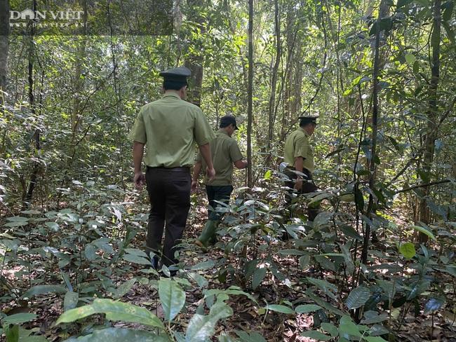 Theo chân bảo vệ vào rừng sâu canh gỗ quý ngày Tết - Ảnh 3.