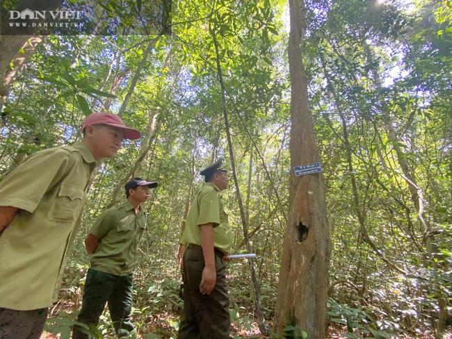 Theo chân bảo vệ vào rừng sâu canh gỗ quý ngày Tết - Ảnh 2.