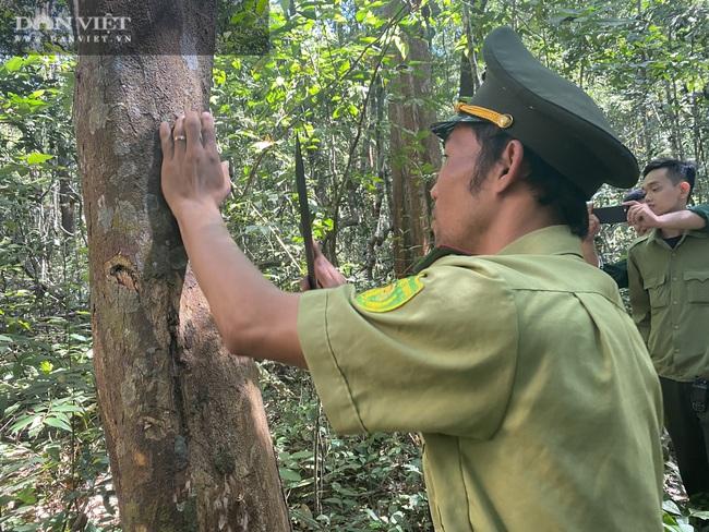Theo chân bảo vệ vào rừng sâu canh gỗ quý ngày Tết - Ảnh 1.