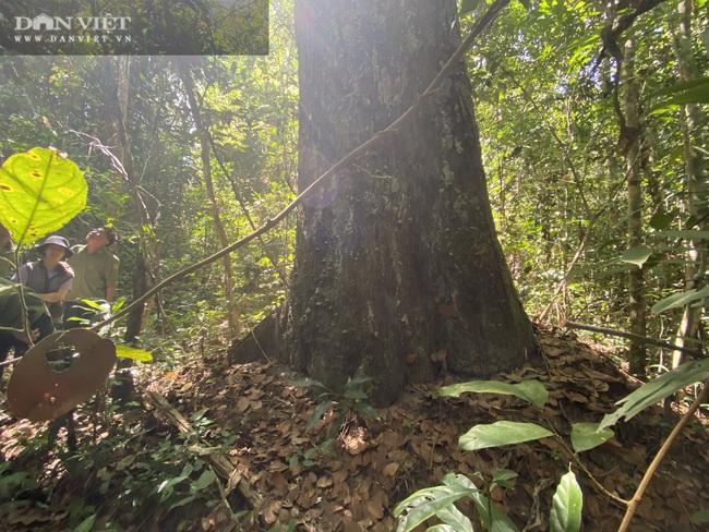 Theo chân bảo vệ vào rừng sâu canh gỗ quý ngày Tết - Ảnh 9.