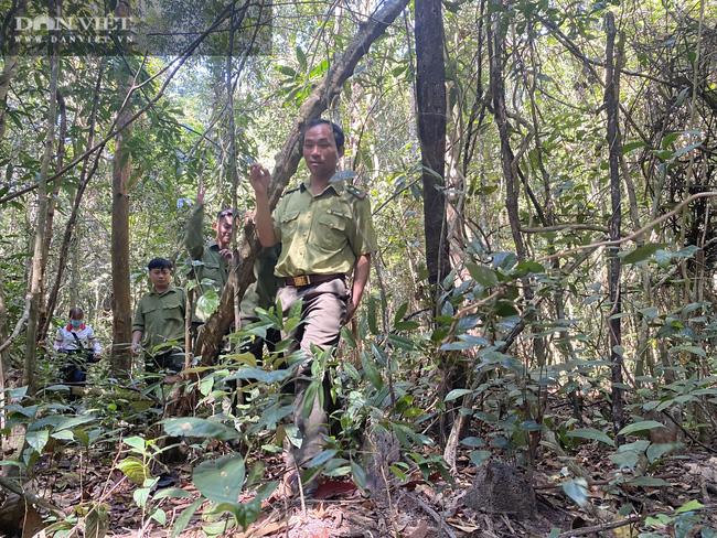 Theo chân bảo vệ vào rừng sâu canh gỗ quý ngày Tết - Ảnh 8.