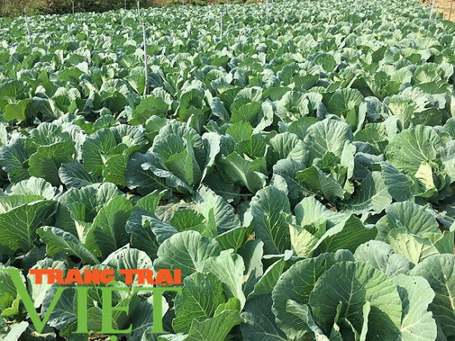 Mường Bon mở rộng diện tích trồng rau màu, tăng cao thu nhập cho nông dân - Ảnh 3.