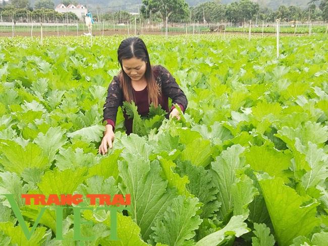 Mường Bon mở rộng diện tích trồng rau màu, tăng cao thu nhập cho nông dân - Ảnh 1.