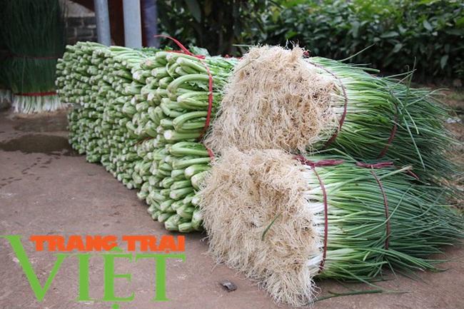 Mường Bon mở rộng diện tích trồng rau màu, tăng cao thu nhập cho nông dân - Ảnh 6.