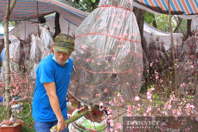 Đào dáng huyền độc lạ tại TP.HCM, giá đến 15 triệu đồng mỗi cành - Ảnh 4.