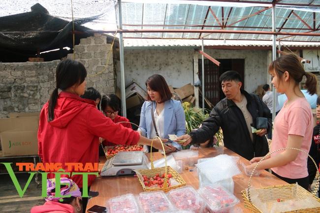 Sơn La: Trồng dâu tây bán Tết, nông dân lãi hàng trăm triệu đồng - Ảnh 7.