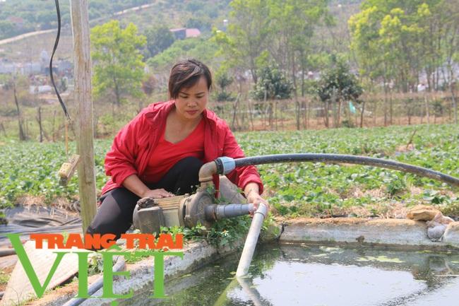 Sơn La: Trồng dâu tây bán Tết, nông dân lãi hàng trăm triệu đồng - Ảnh 2.