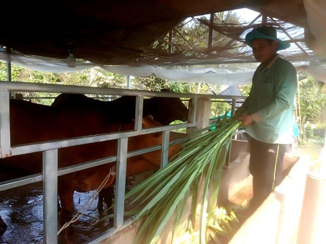 """Long An: Mô hình""""Mượn giống nuôi bò thịt"""" giàu có ra sao mà huyện ra nghị quyết kêu gọi nông dân nuôi bò? - Ảnh 3."""
