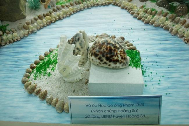 """Bộ sưu tập vỏ ốc """"khủng"""" từ Hoàng Sa, Trường Sa tại Đà Nẵng - Ảnh 6."""