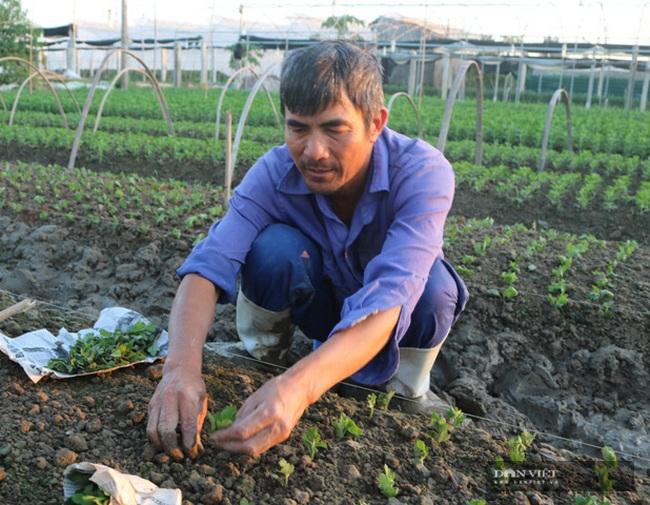 Thiệu Hóa (Thanh Hóa): Nhiều mô hình chuyển đổi đất lúa kém hiệu qua cho thu nhập cả trăm triệu/ha - Ảnh 6.