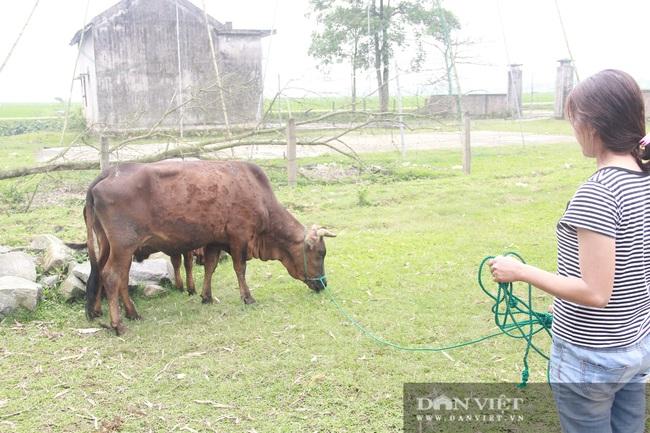 """Clip: Trâu, bò ở Hà Tĩnh xuất hiện """"bệnh lạ"""", người dân lo lắng - Ảnh 5."""