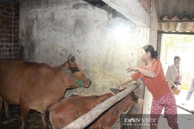 """Clip: Trâu, bò ở Hà Tĩnh xuất hiện """"bệnh lạ"""", người dân lo lắng - Ảnh 8."""