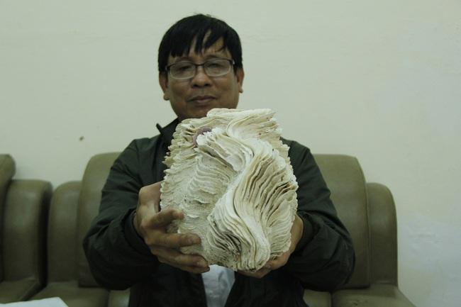 """Bộ sưu tập vỏ ốc """"khủng"""" từ Hoàng Sa, Trường Sa tại Đà Nẵng - Ảnh 2."""