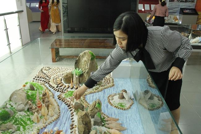 """Bộ sưu tập vỏ ốc """"khủng"""" từ Hoàng Sa, Trường Sa tại Đà Nẵng - Ảnh 9."""