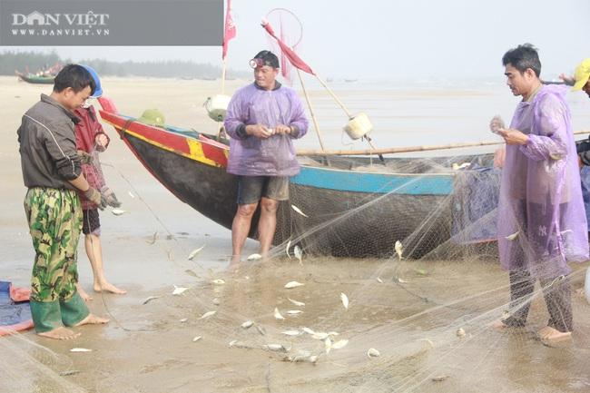 Ngư dân Cẩm Xuyên (Hà Tĩnh) săn cá trích, bỏ túi chục triệu đồng mỗi ngày - Ảnh 4.