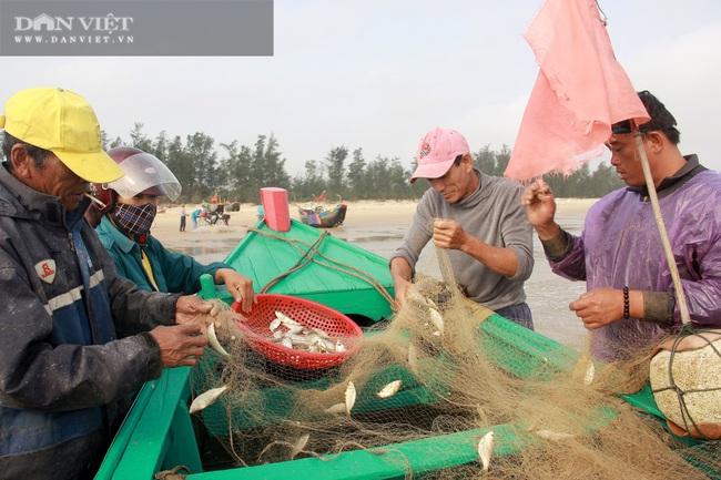 Ngư dân Cẩm Xuyên (Hà Tĩnh) săn cá trích, bỏ túi chục triệu đồng mỗi ngày - Ảnh 1.