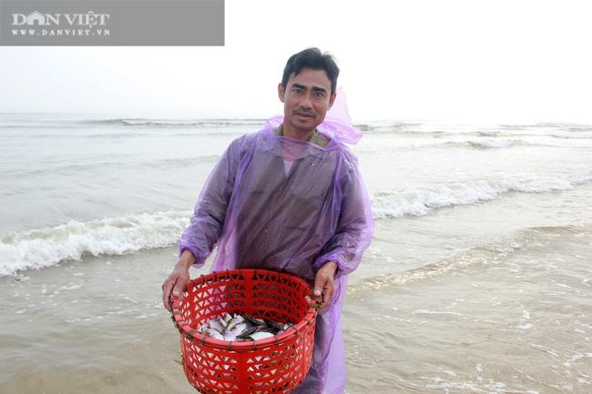 Ngư dân Cẩm Xuyên (Hà Tĩnh) săn cá trích, bỏ túi chục triệu đồng mỗi ngày - Ảnh 3.