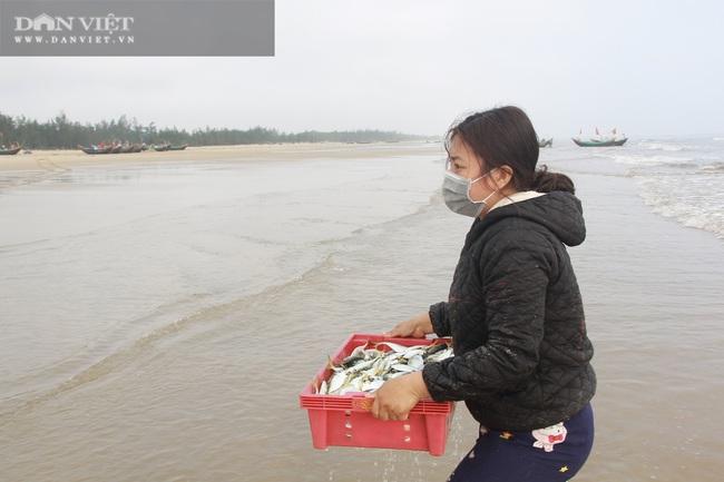 Ngư dân Cẩm Xuyên (Hà Tĩnh) săn cá trích, bỏ túi chục triệu đồng mỗi ngày - Ảnh 6.
