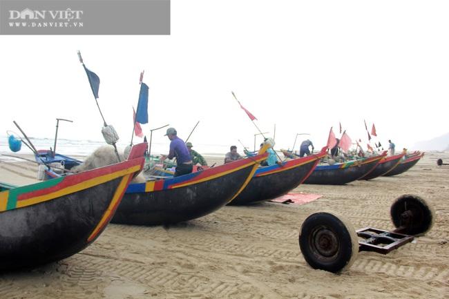 Ngư dân Cẩm Xuyên (Hà Tĩnh) săn cá trích, bỏ túi chục triệu đồng mỗi ngày - Ảnh 8.