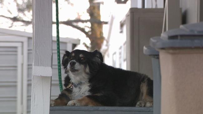 Chú chó giàu nhất thế giới nhờ thừa kế hàng trăm tỷ đồng từ di chúc của chủ - Ảnh 1.