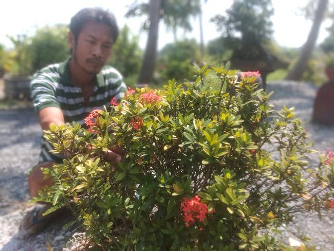 Trồng xen loại hoa dại này có cứu được nông dân sau những vụ mai bết bát? - Ảnh 1.