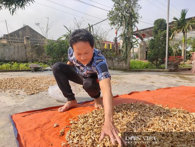 Hà Tĩnh: Loài cây dinh dưỡng được trồng từ phế thải nông nghiệp, chủ nhân lãi nửa tỷ đồng/năm - Ảnh 8.