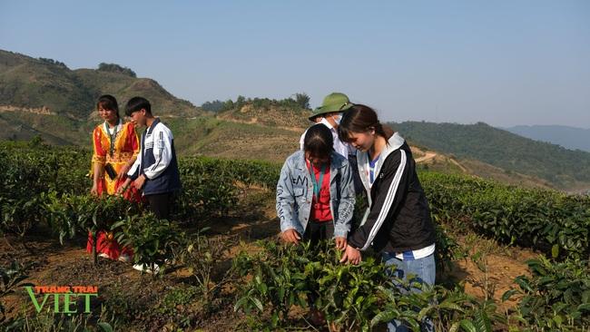 """Chính sách hỗ trợ sản xuất """"tiếp sức"""" cho nông nghiệp Sìn Hồ phát triển - Ảnh 3."""