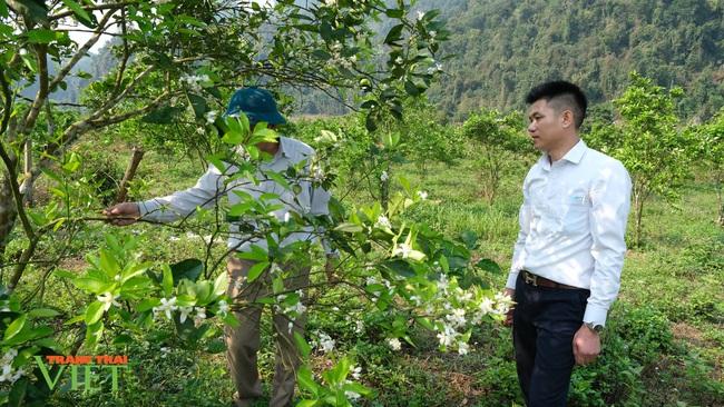 """Chính sách hỗ trợ sản xuất """"tiếp sức"""" cho nông nghiệp Sìn Hồ phát triển - Ảnh 2."""