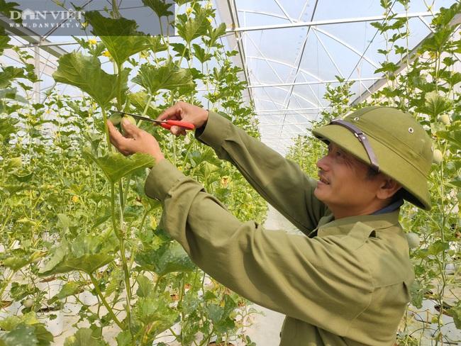 """Hà Tĩnh: Ứng dụng công nghệ trồng dưa lưới, """"lão nông"""" lãi hàng trăm triệu đồng mỗi năm"""
