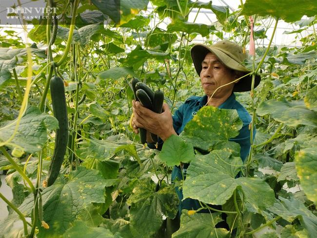 """Hà Tĩnh: Ứng dụng công nghệ trồng dưa lưới, """"lão nông"""" lãi hàng trăm triệu đồng mỗi năm - Ảnh 3."""