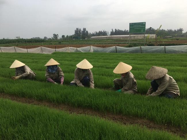 Làm liều với sản phẩm mì rau, củ hữu cơ, bà chủ trẻ có cơ ngơi hàng chục tỷ đồng   - Ảnh 2.