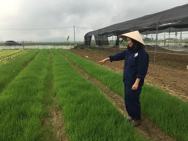 Làm liều với sản phẩm mì rau, củ hữu cơ, bà chủ trẻ có cơ ngơi hàng chục tỷ đồng   - Ảnh 3.