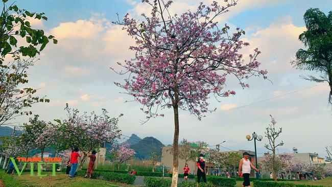 Thành phố Lai Châu ngập tràn sắc trắng hoa ban - Ảnh 1.