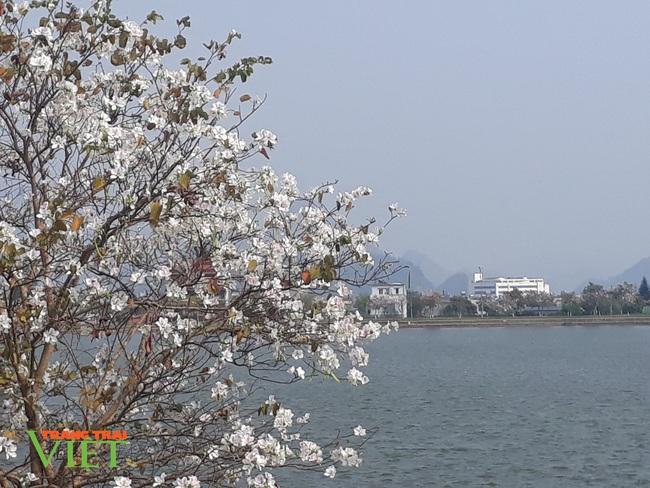 Thành phố Lai Châu ngập tràn sắc trắng hoa ban - Ảnh 5.