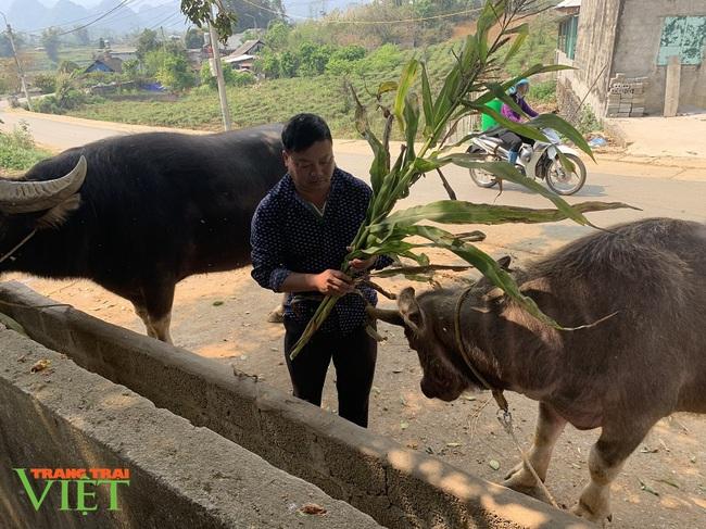 Nuôi trâu vỗ béo, ông nông dân người Mông ở Lai Châu giàu lên trông thấy - Ảnh 2.