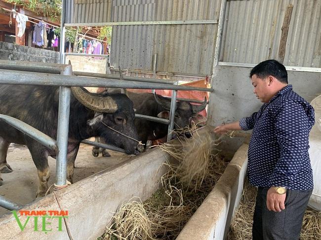 Nuôi trâu vỗ béo, ông nông dân người Mông ở Lai Châu giàu lên trông thấy - Ảnh 1.